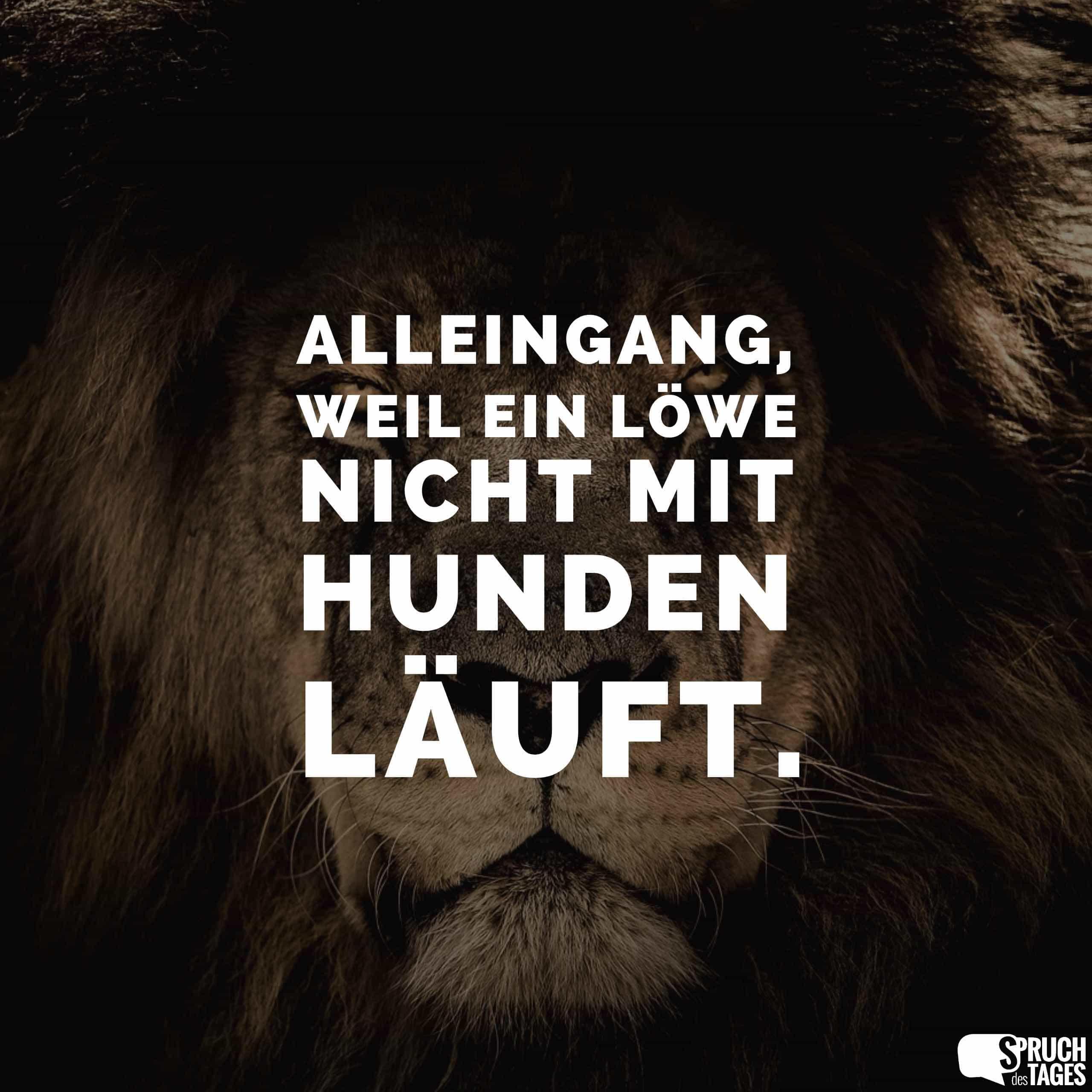 sprüche mit löwen Alleingang, weil ein Löwe nicht mit Hunden läuft. sprüche mit löwen