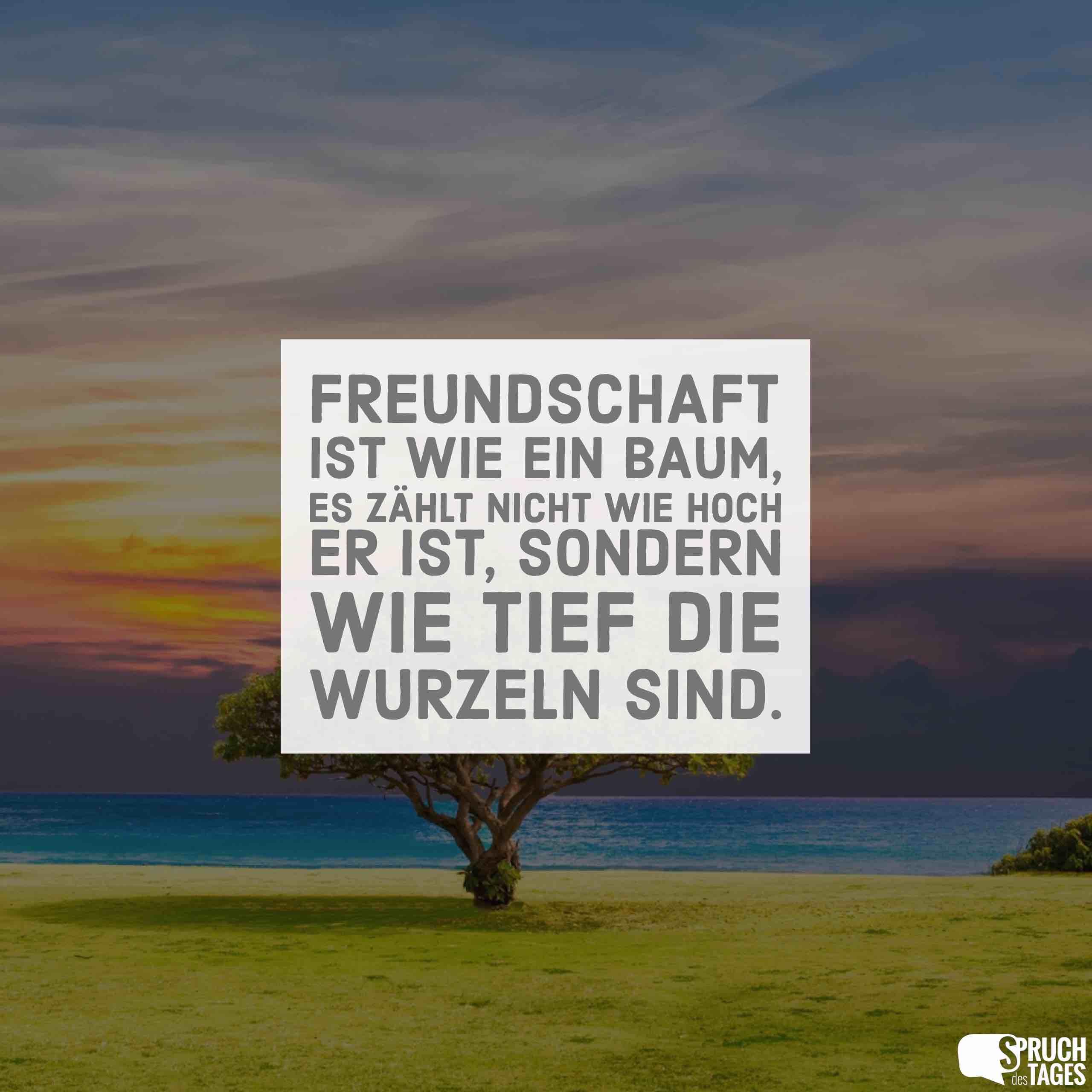 Freundschaft ist wie ein Baum, es zählt nicht wie hoch er ...
