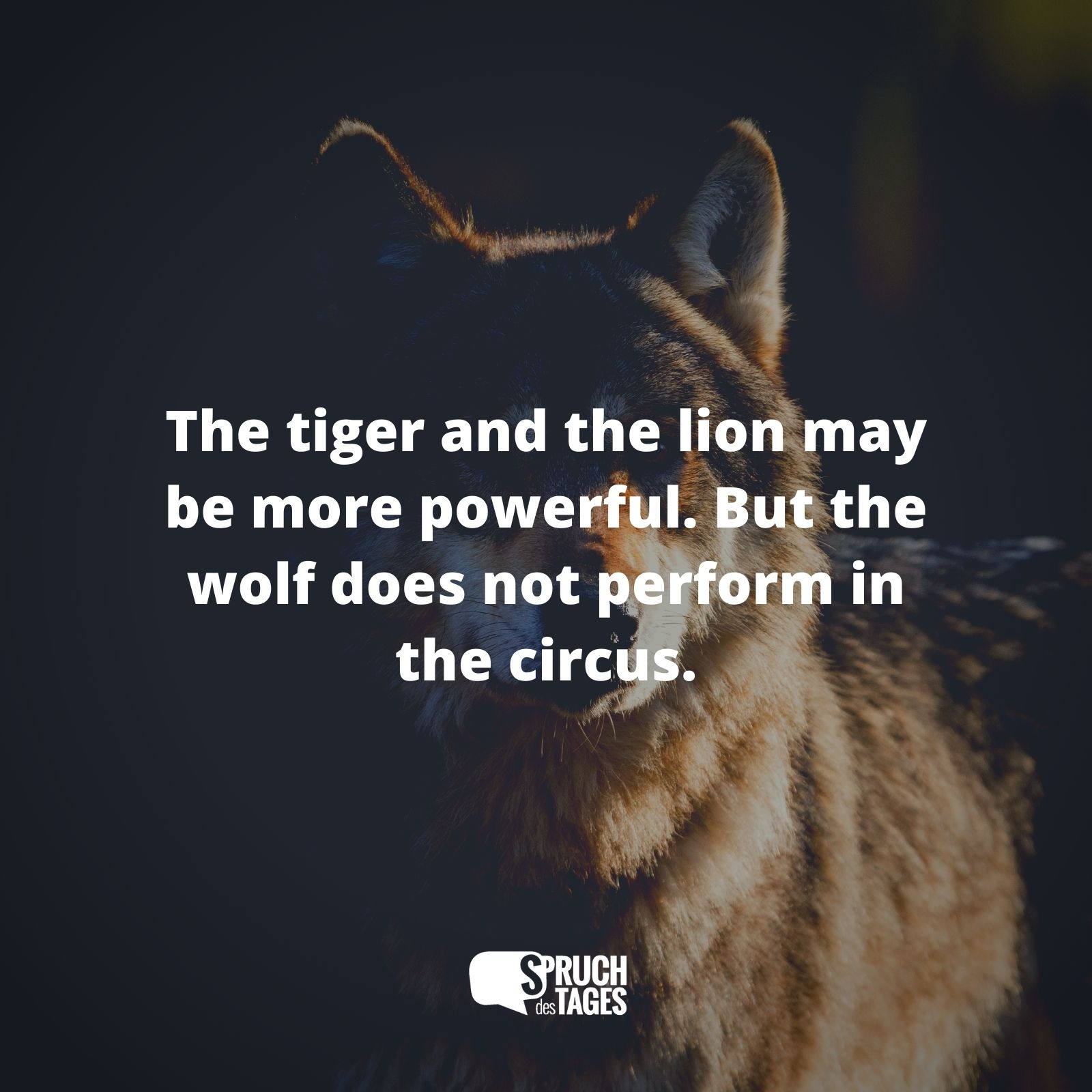 The tiger and the lion may be, more powerful. But the wolf does not perform in the circus.