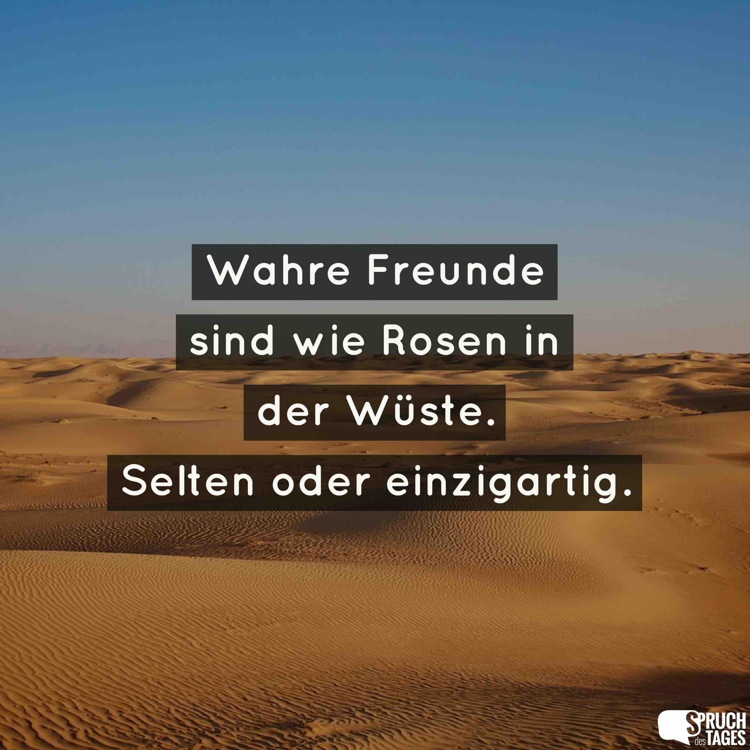 Wahre Freunde sind wie Rosen in der Wüste. Selten oder einzigartig.