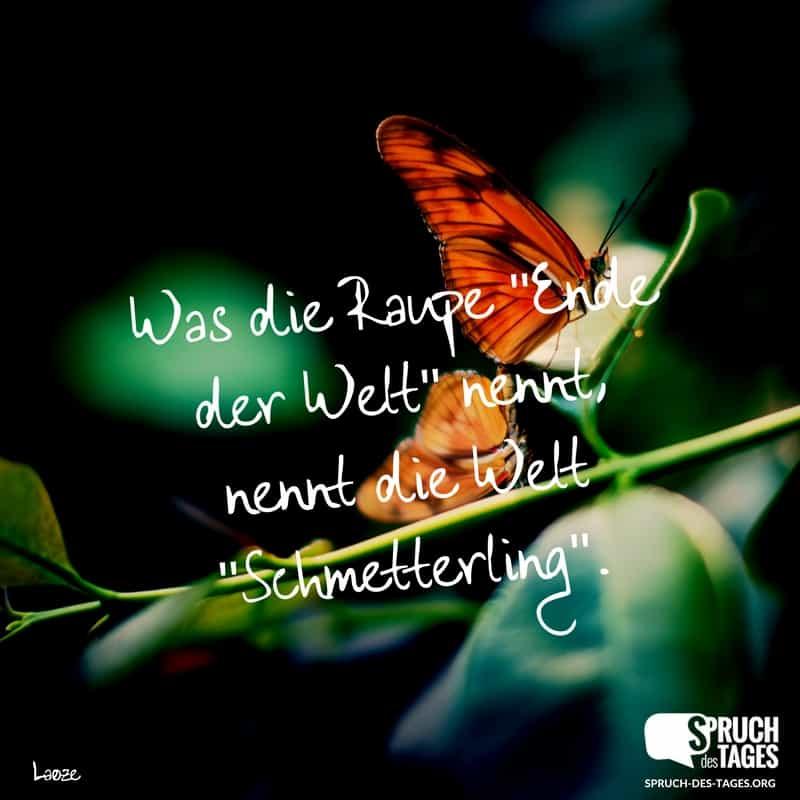 Schmetterling Sprüche Kurz 1001 Sprueche